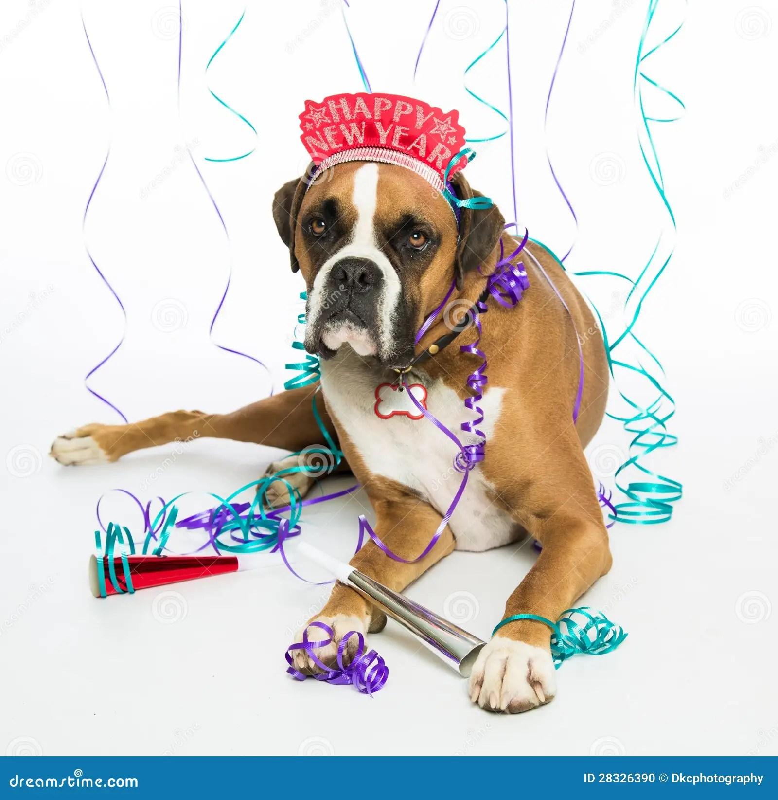 Boxer Dog Happy New Year Stock Photo Image Of Colorful 28326390