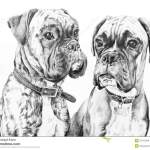 Boxer Dogs Pencil Drawing Stock Illustration Illustration Of Hand 55715358