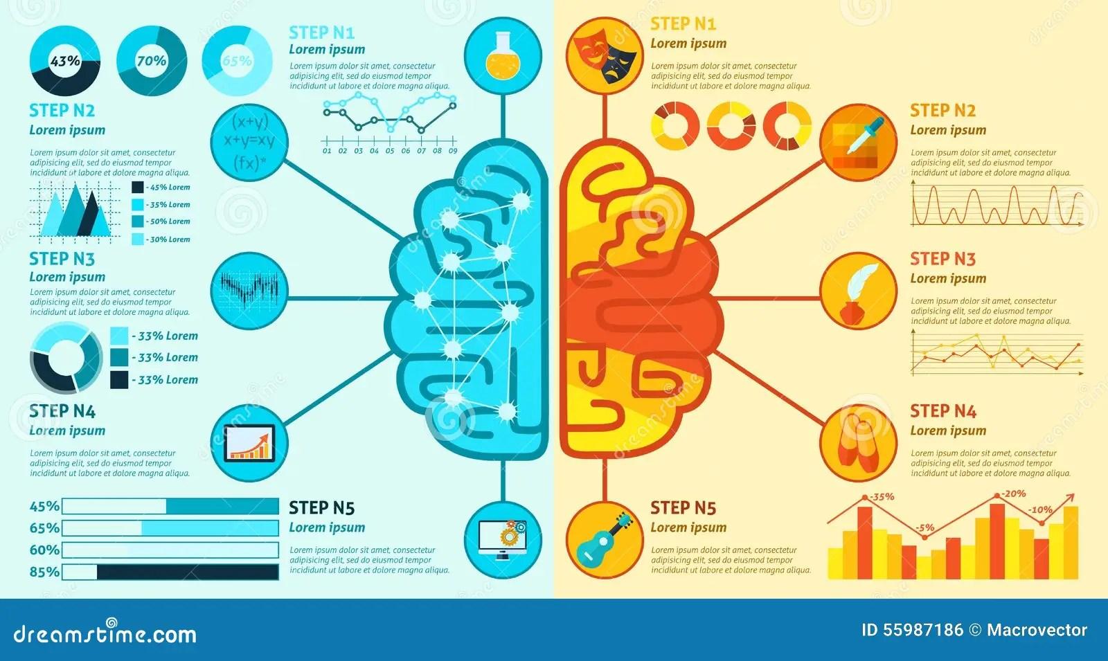Brain Infographics Gauche Et Droit Illustration De Vecteur