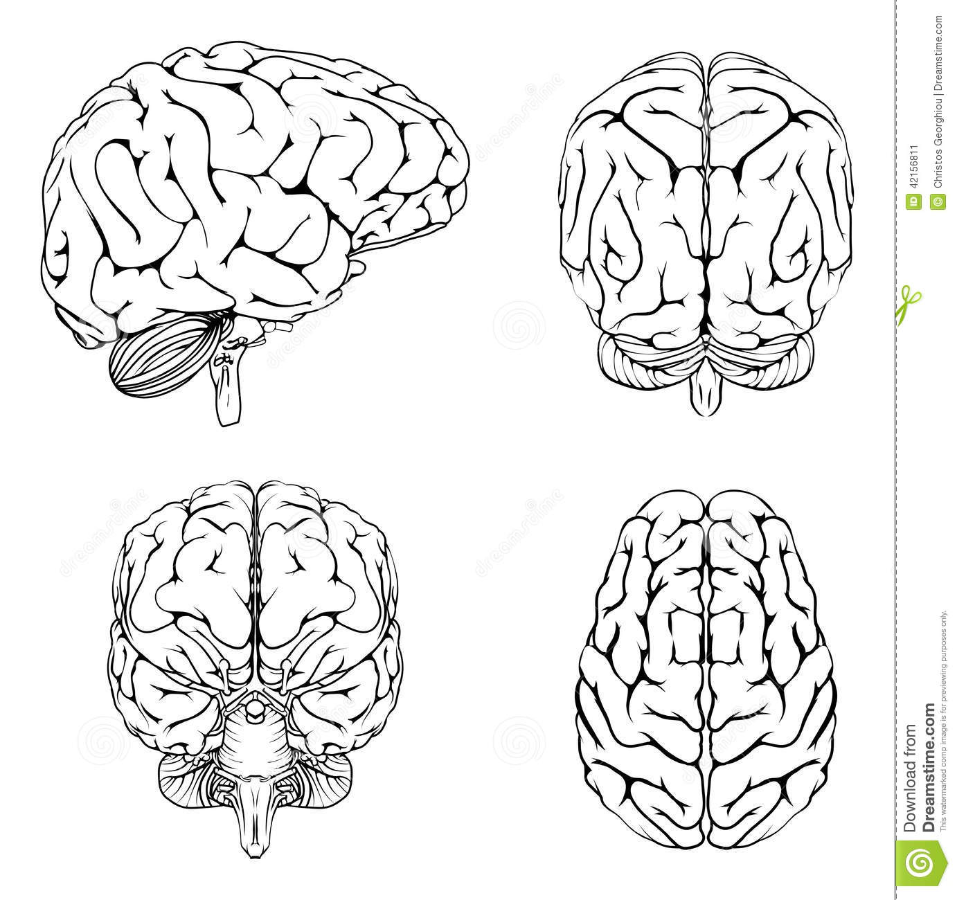 Brain From Top Side Front And Back Cartoon Vector