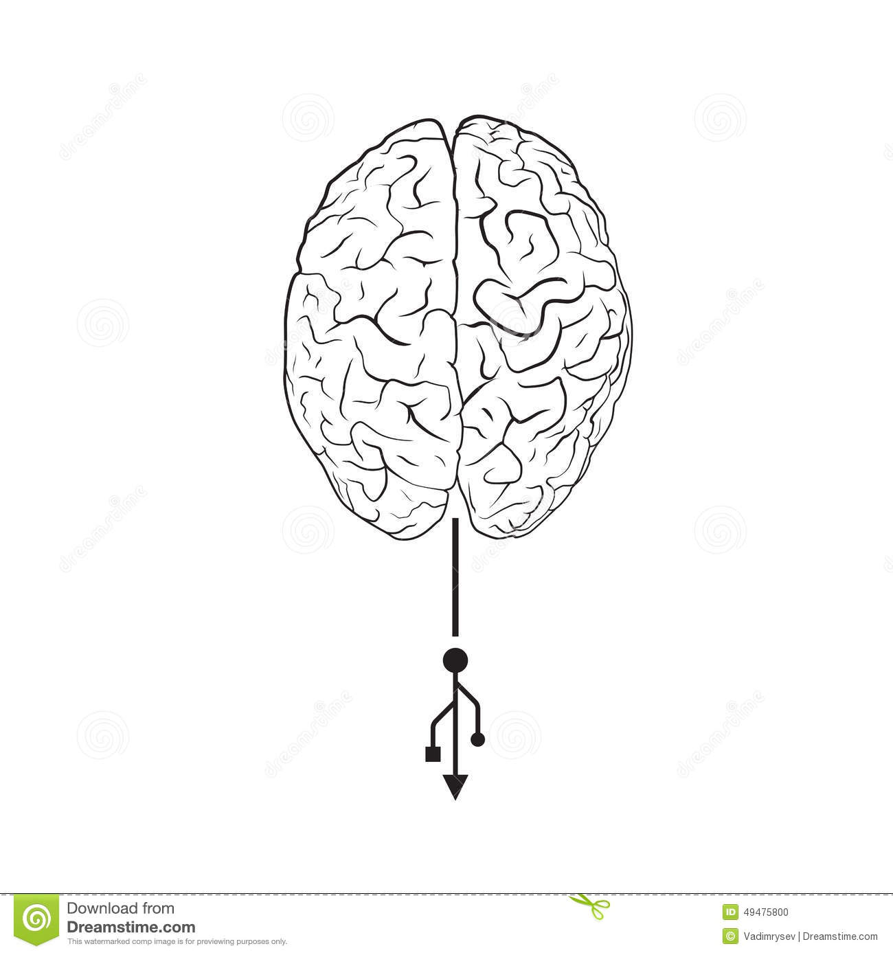 Brain With Usb Mark Stock Vector Image Of Clever Human