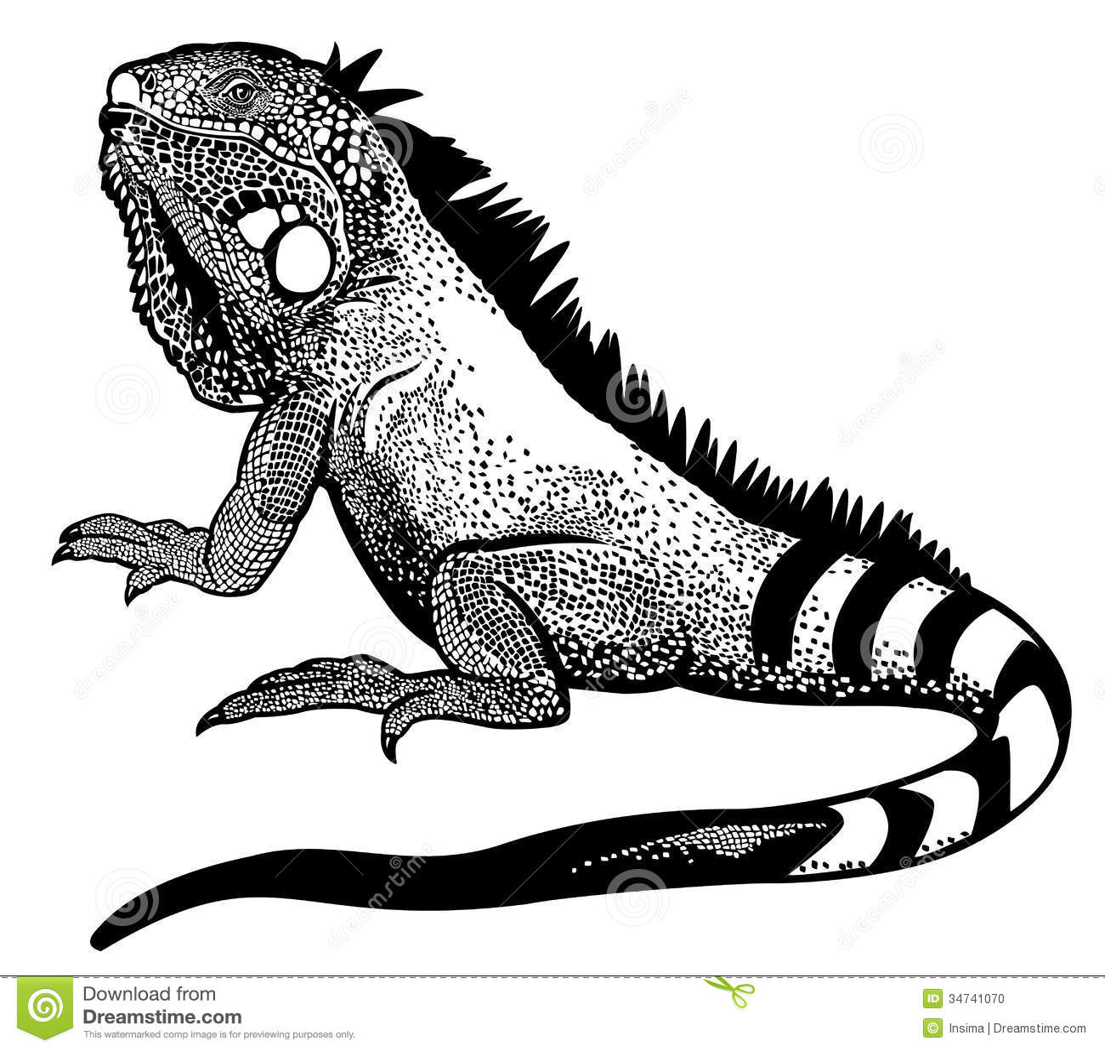Branco Preto Da Iguana Ilustracao Do Vetor Ilustracao De
