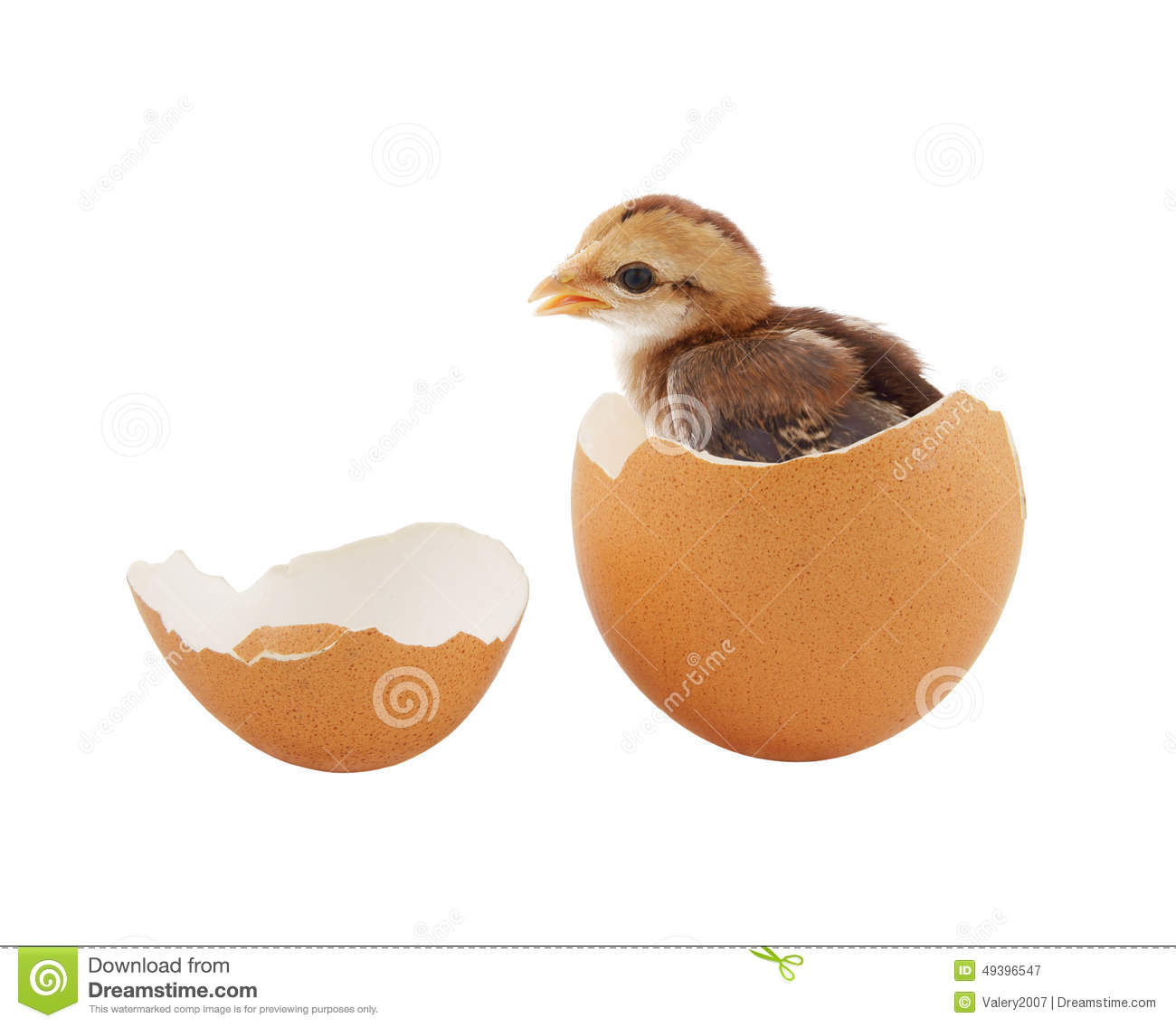 Brown Baby Chick Inside Egg Stock Image