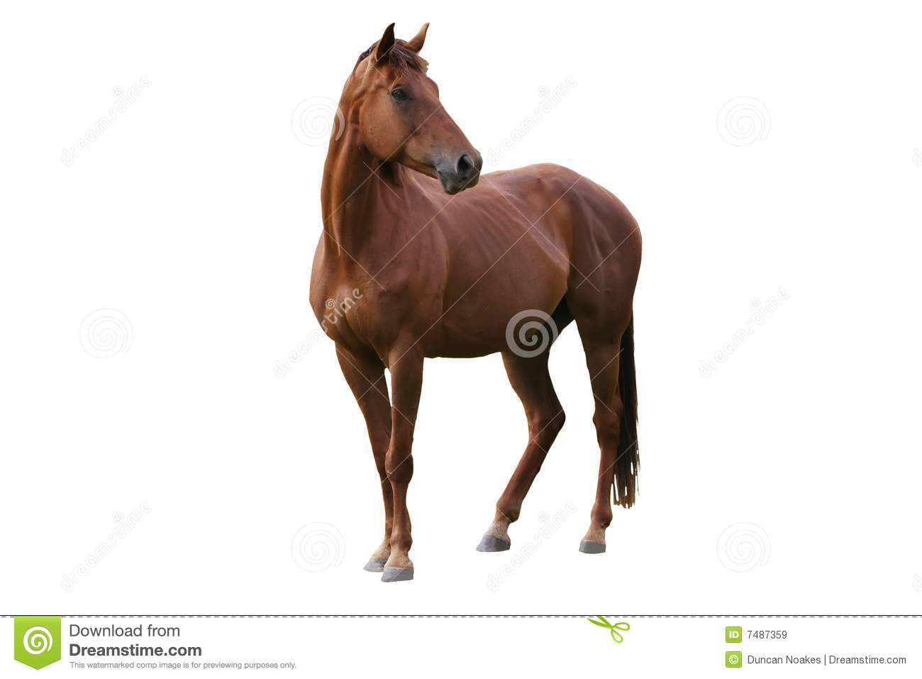 brown horse isolated royalty free stock images - image: 7487359