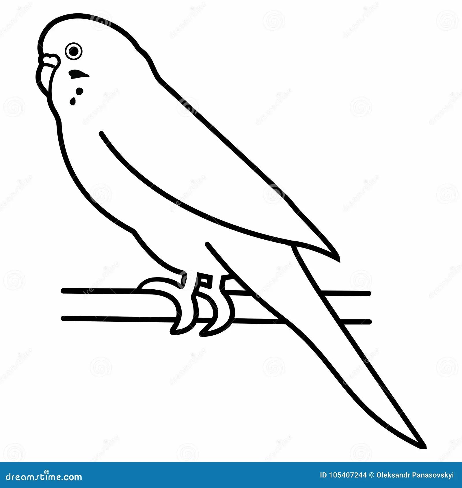 Budgerigar Parrot Bird Animal Parakeet Pet Small Tropical