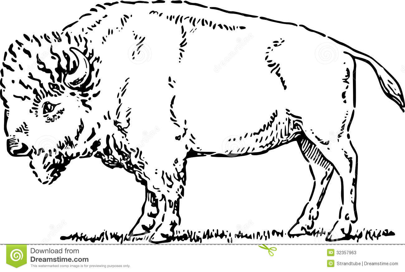 Hand Drawn Buffalo Eps Stock Vector Illustration Of