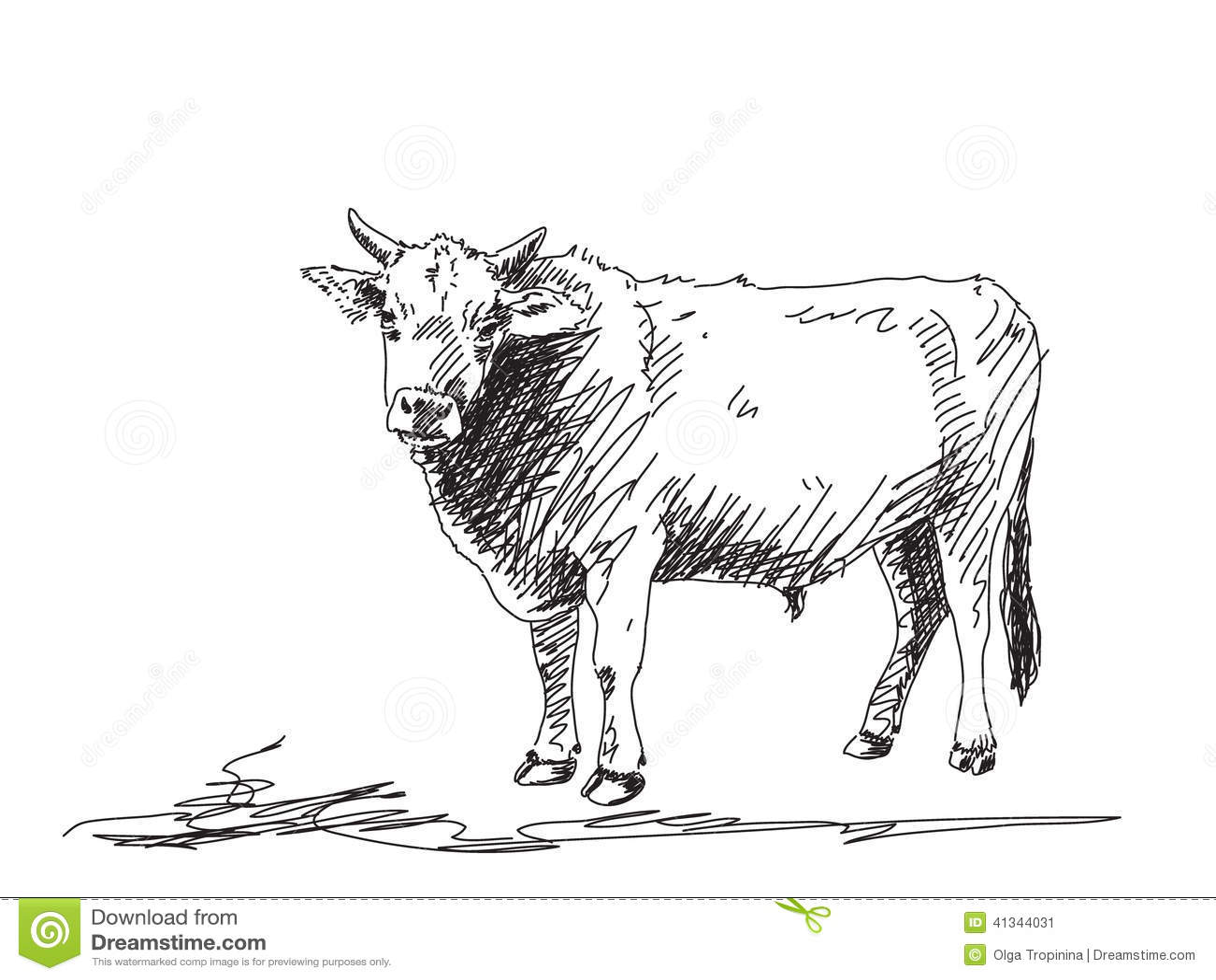 Bull Sketch Stock Vector Image Of Taurus Free Power