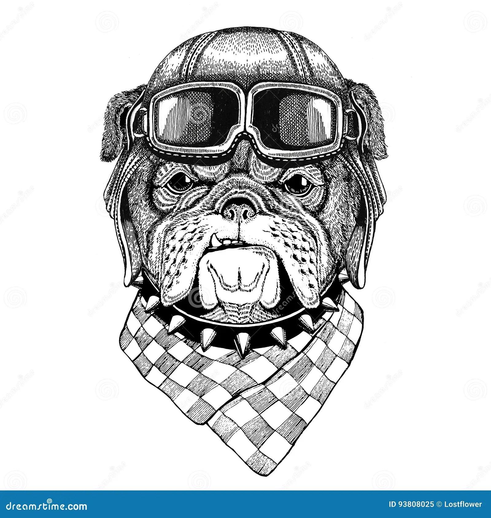 Bulldog Wearing Leather Helmet Aviator Biker Motorcycle