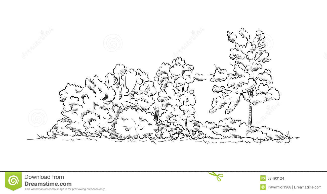 Bushes And Trees Stock Vector Image Of Striped Foliage