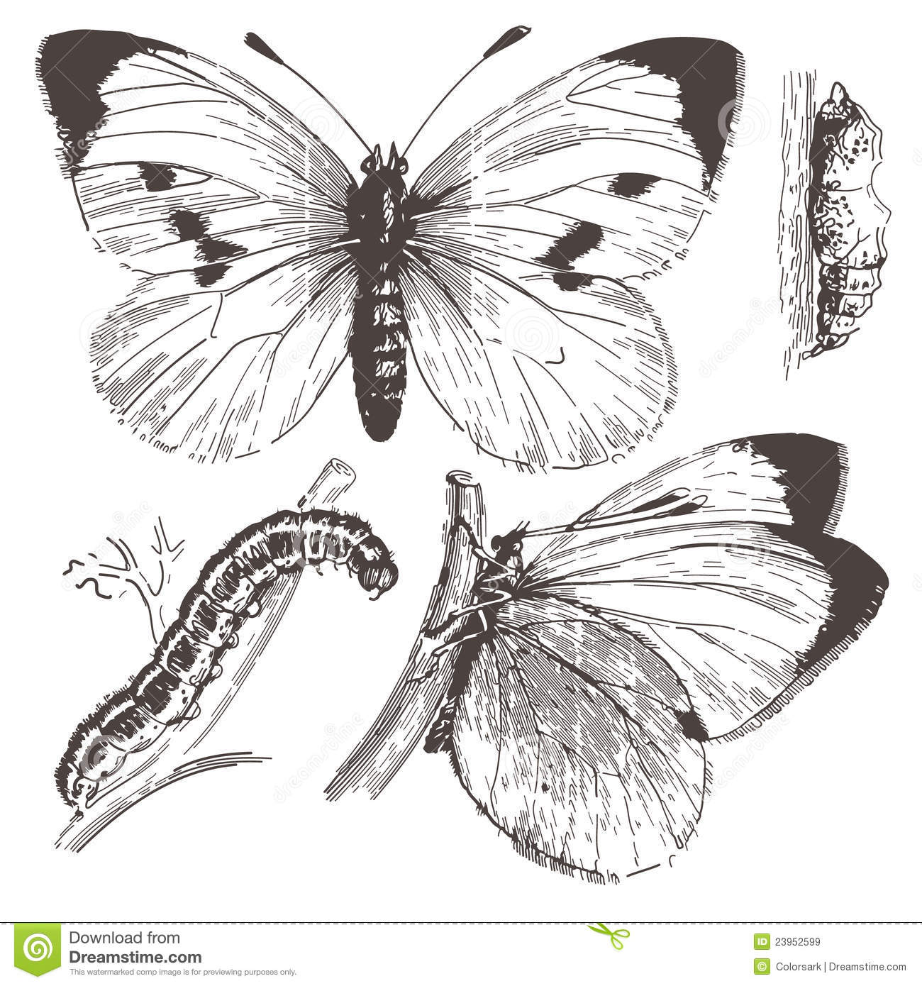 Butterfly Ink Drawingctor Royalty Free Stock Images