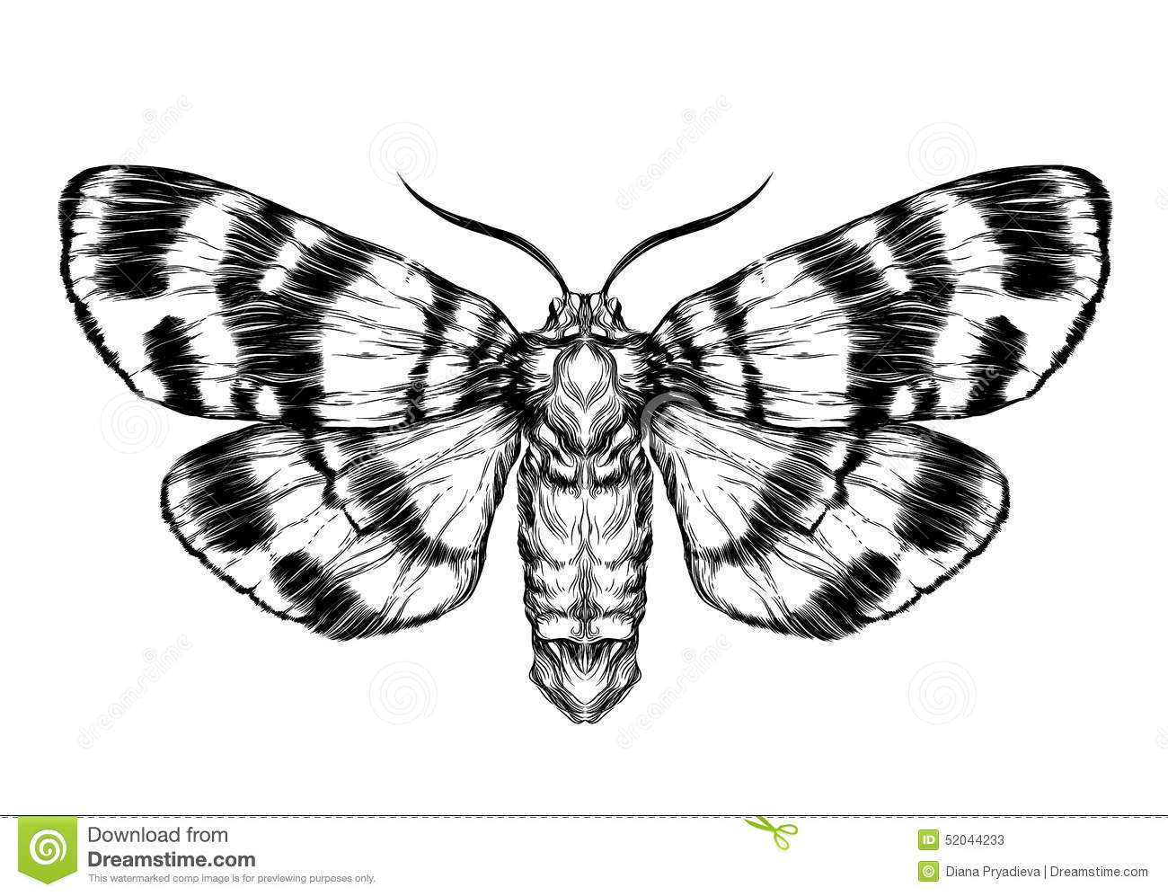 Butterfly Moth Sketch Detailed Realistic Sketch Of A