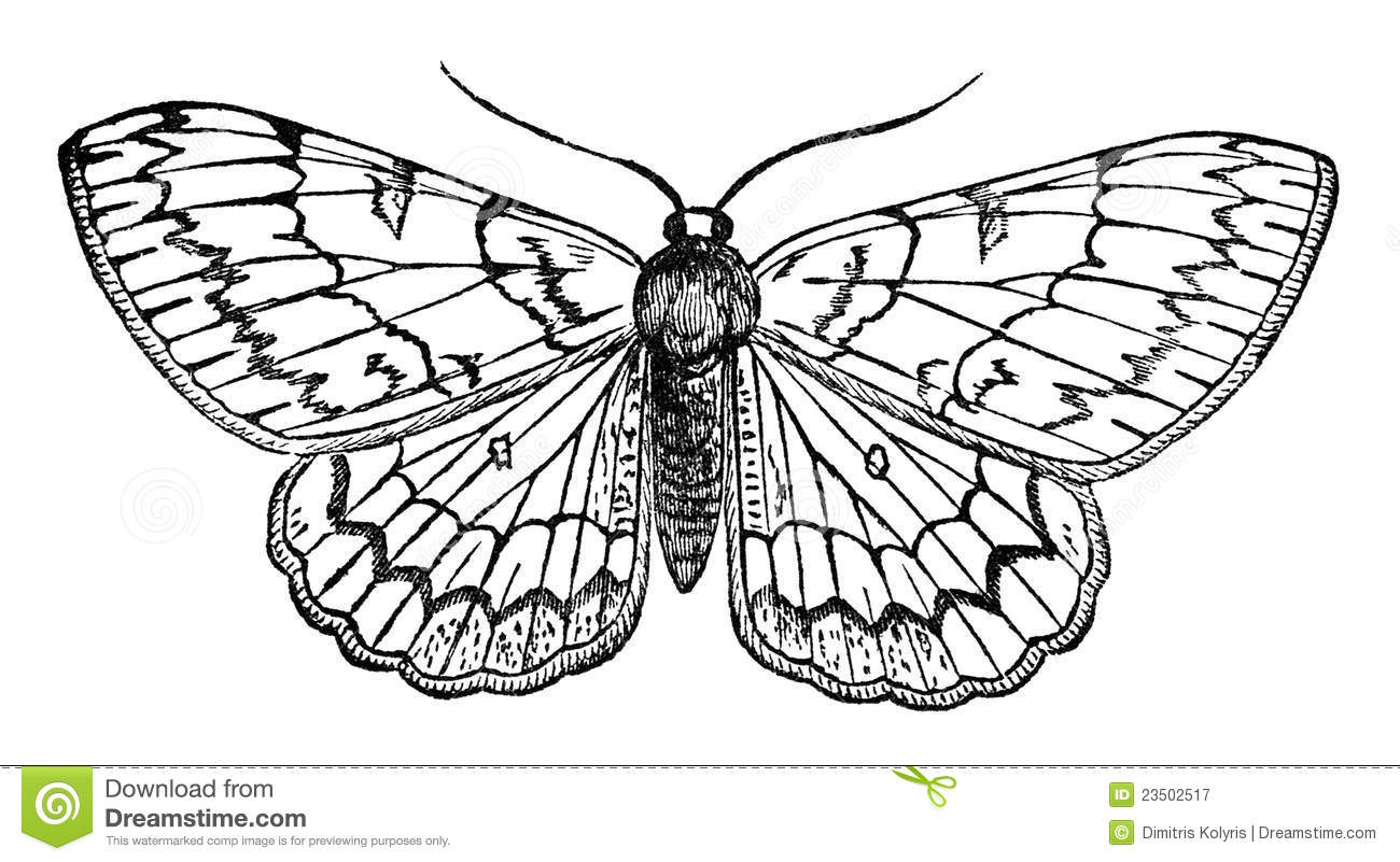 Butterfly Vintage Illustration Stock Illustration