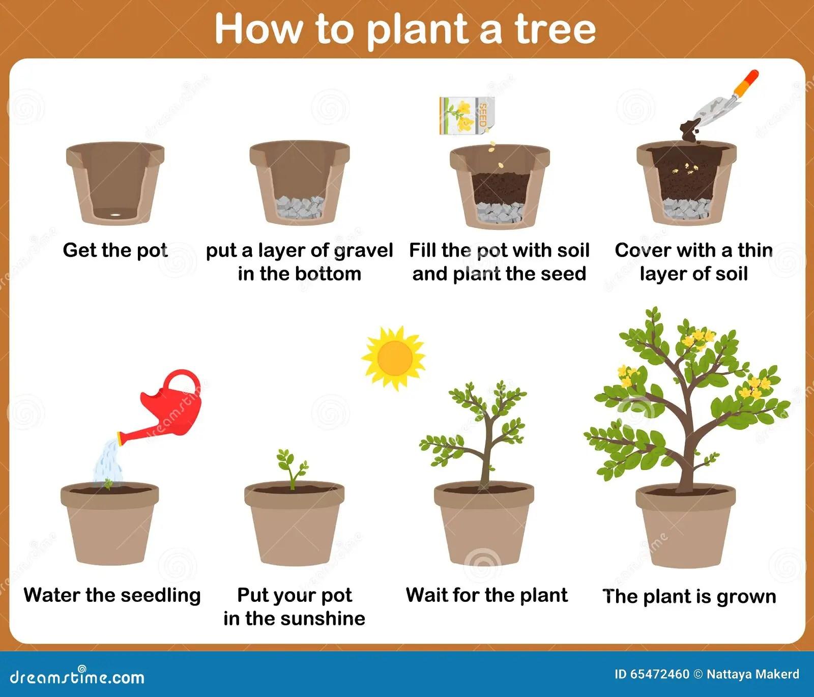 Como Crecer Las Plantas Ilustracion Del Vector