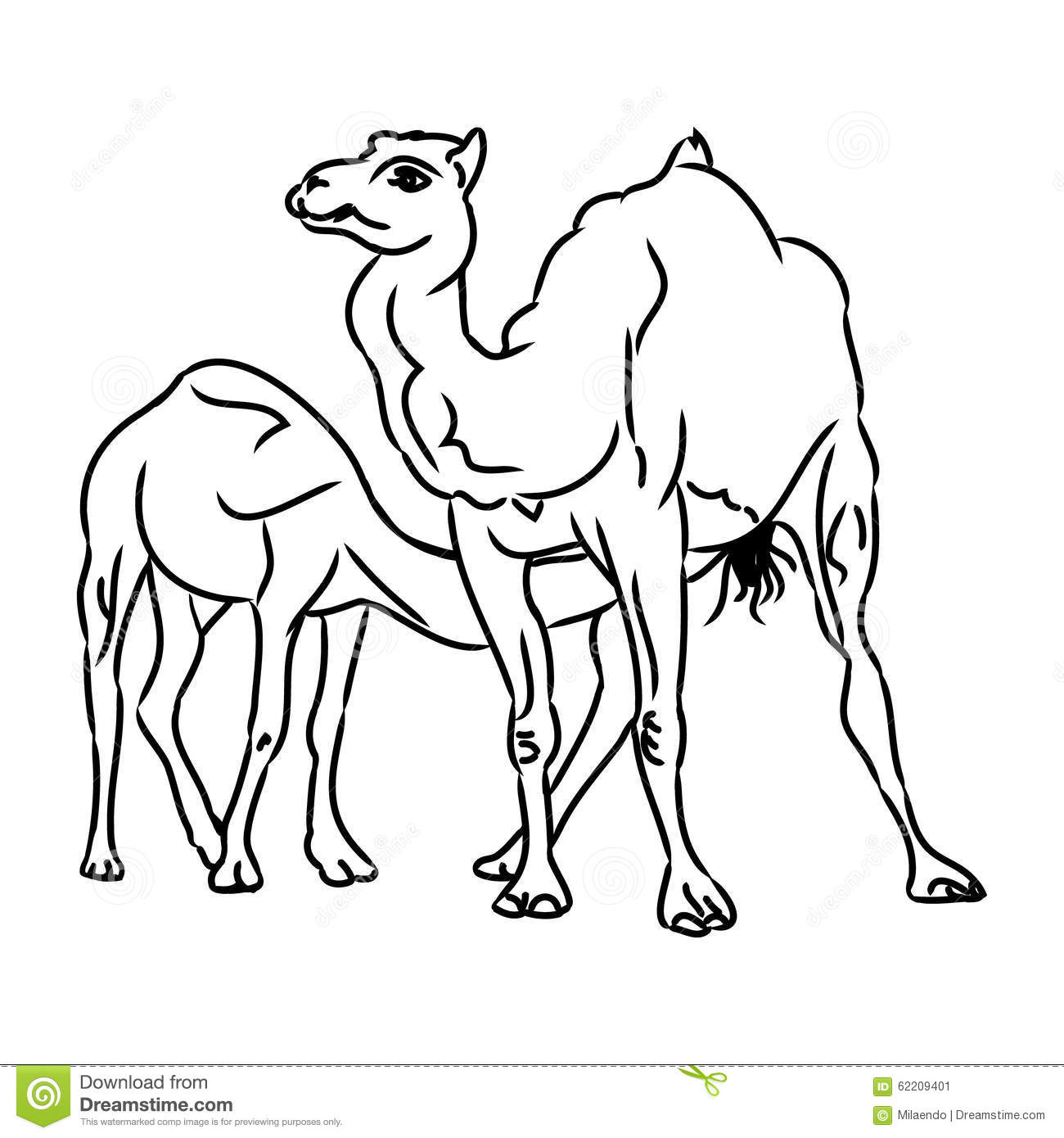 Camel And Camel Simple Sketch Stock Vector