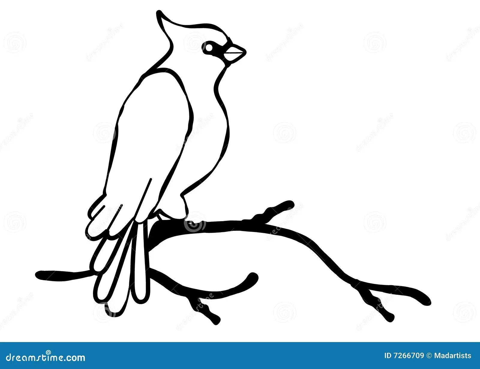 Cardinal Bird Line Art Stock Illustration Illustration Of
