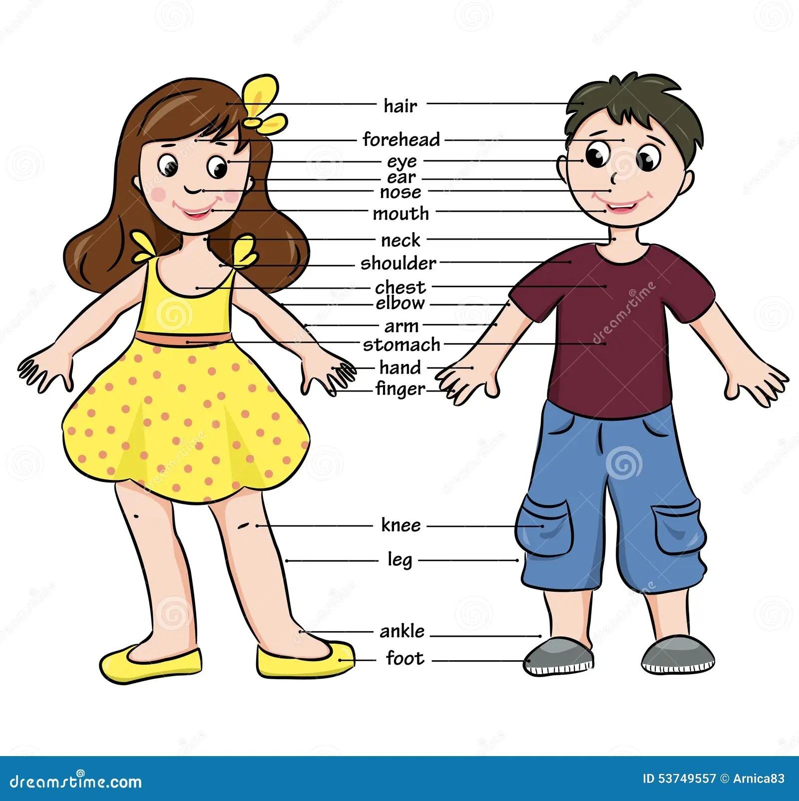 Cartoon Boy And Girl Vocabulary Of Body Parts Stock