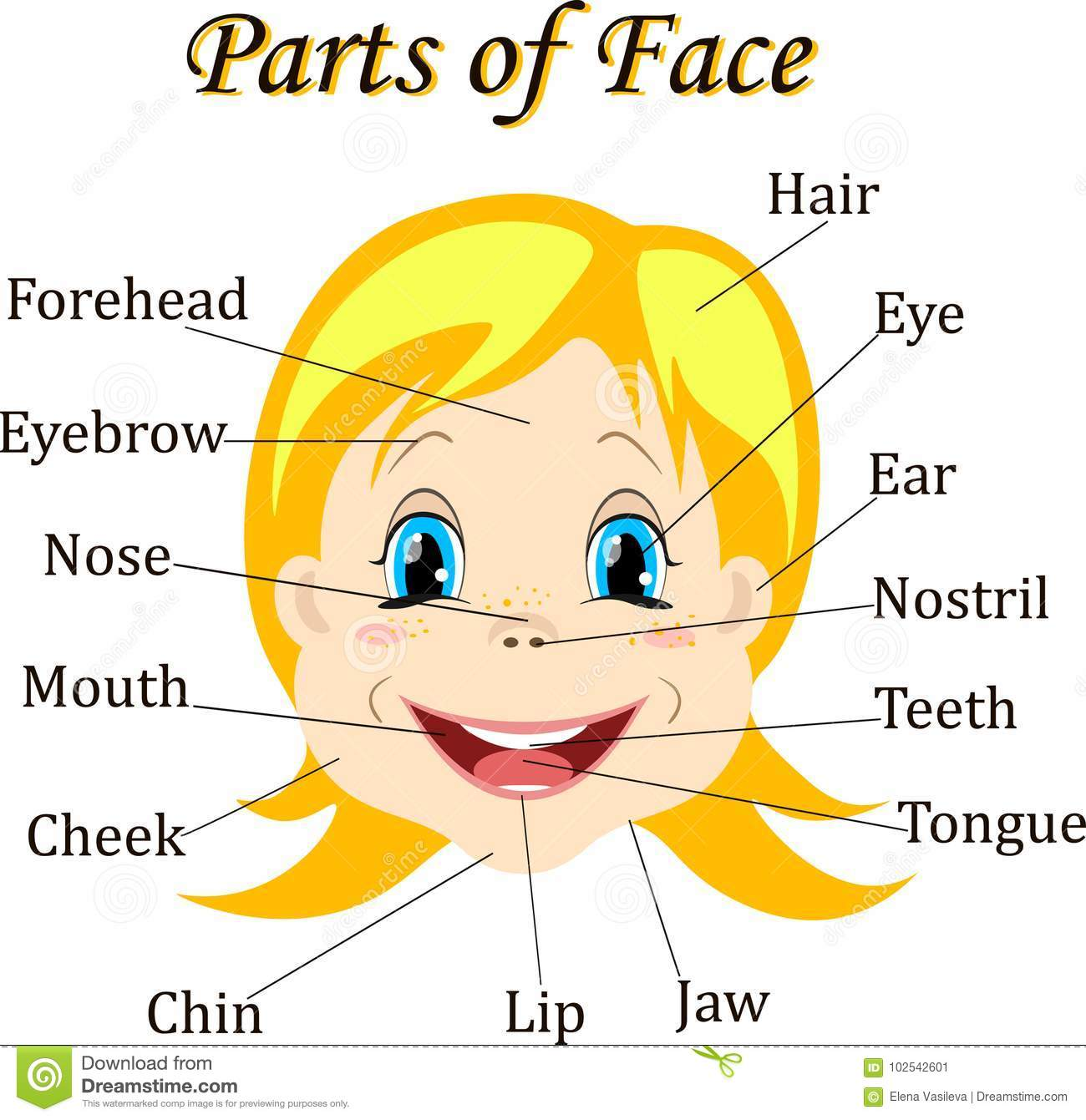 Free Worksheet Parts Of The Face