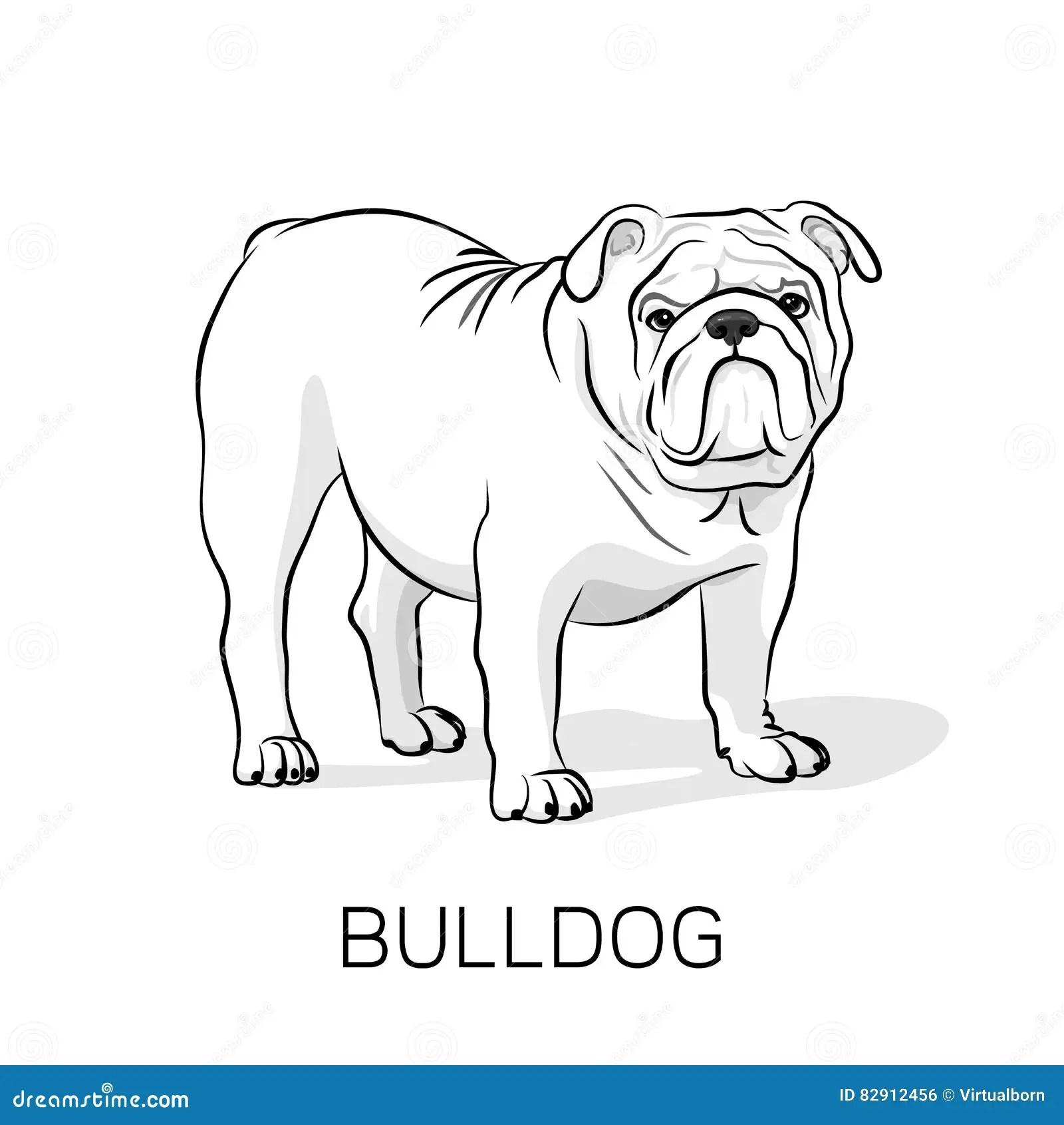 Cartoon English Bulldog G Illustration Stock Vector