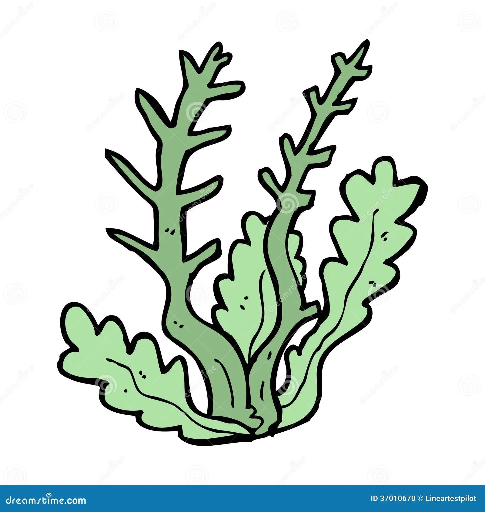 Cartoon Seaweed Stock Photo Image 37010670