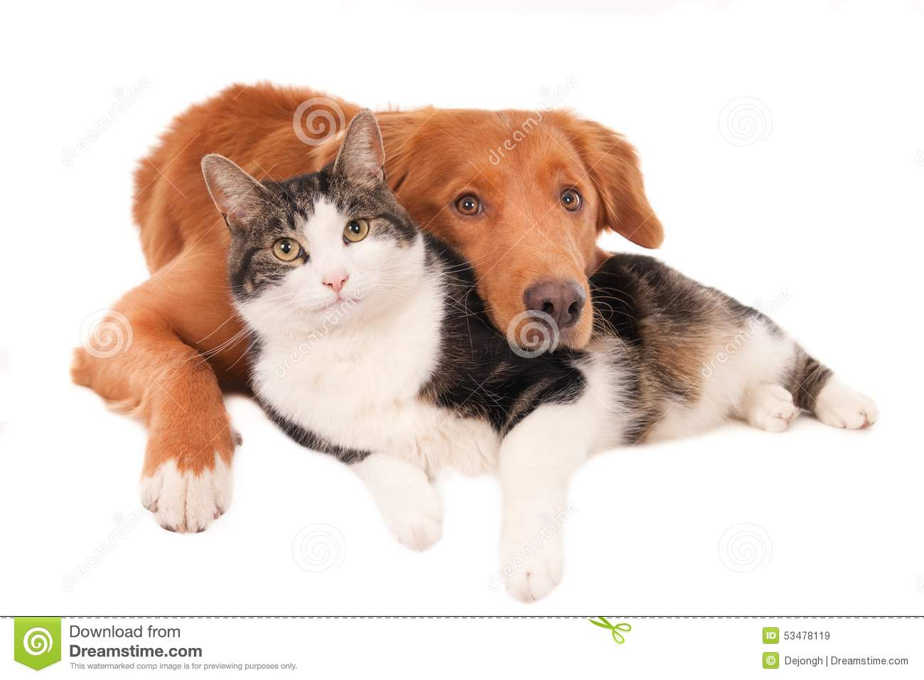 Cat And Dog In An Intimate Pose Isolated On White Stock