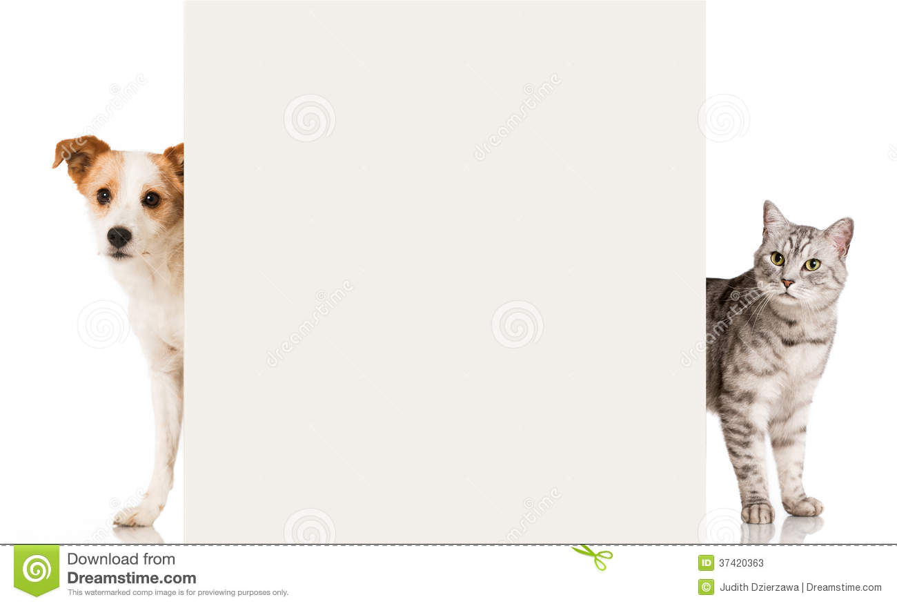 Cat And Dog Stock Image Image Of Wall Breed Isolated