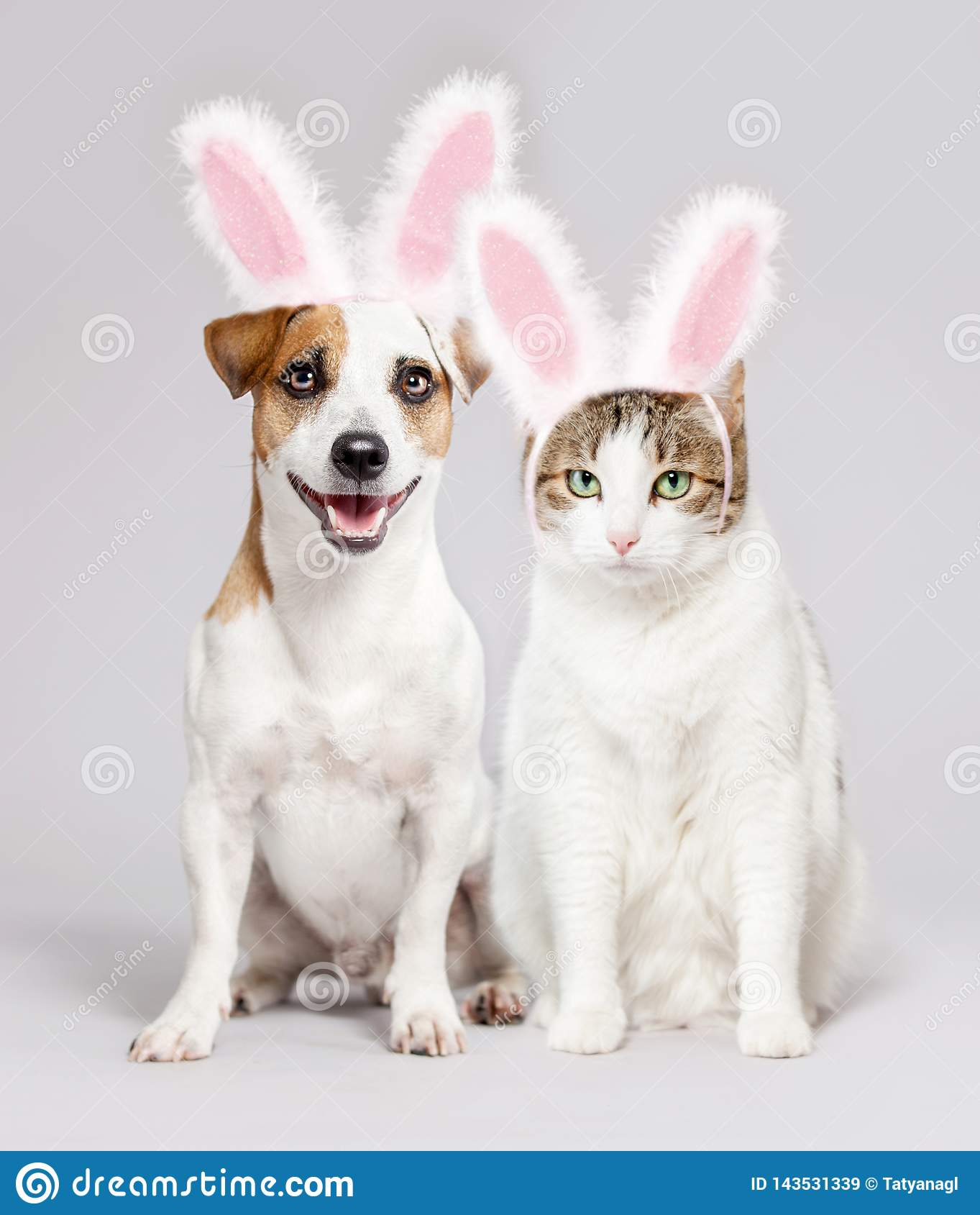 Cat And Dog Wearing Easter Bunny Ears Peeking Out Stock Image Image Of Kitten Holiday 143531339