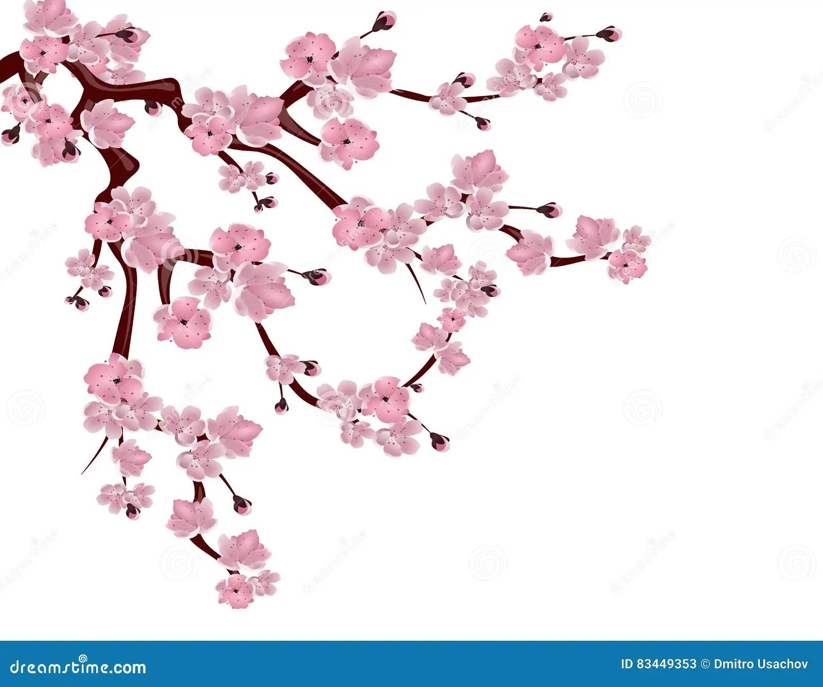 Cerisier Japonais Branche De Propagation Des Fleurs De Cerisier Roses D Isolement Sur Le Fond Blanc Illustration Illustration De Vecteur Illustration Du Element Mariage 83449353