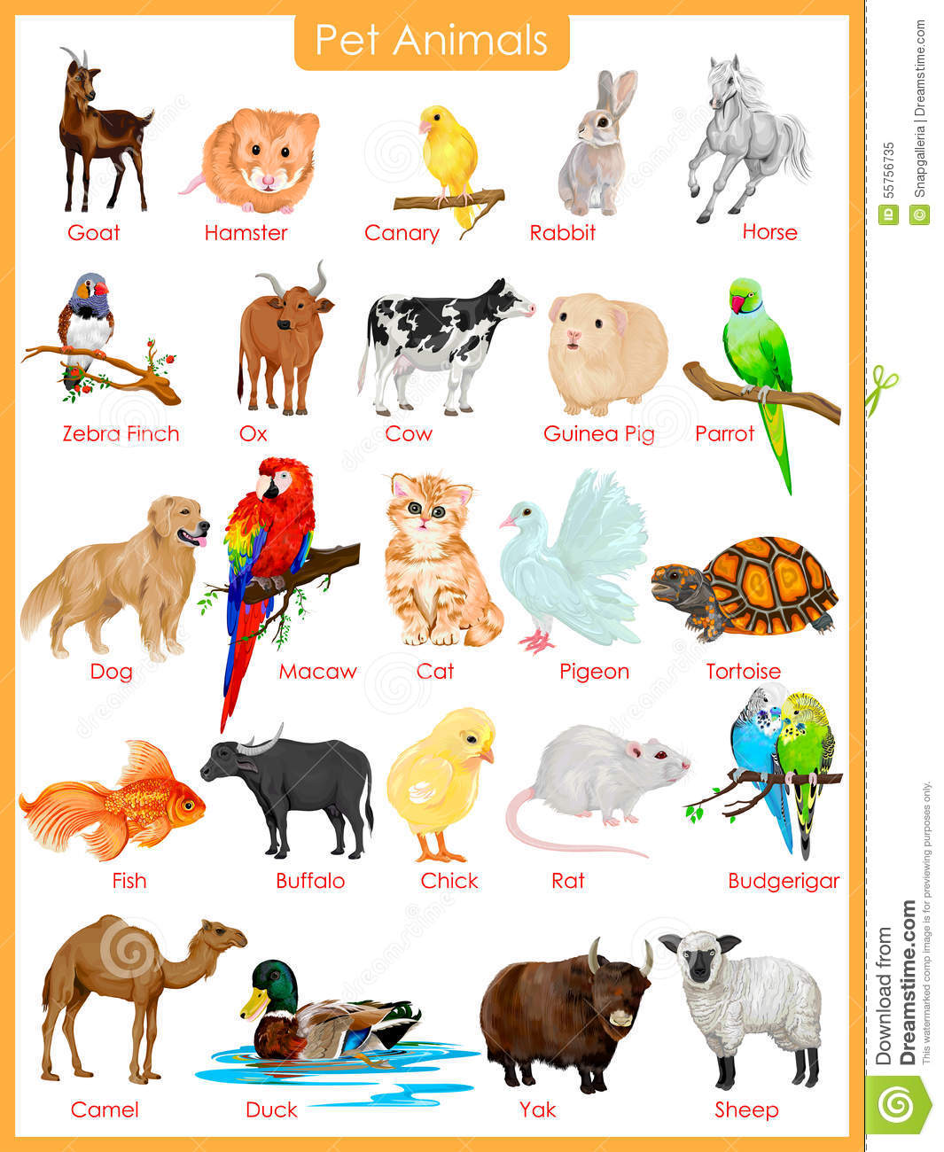 Chart Of Pet Animals Stock Vector Image Of Buffalo