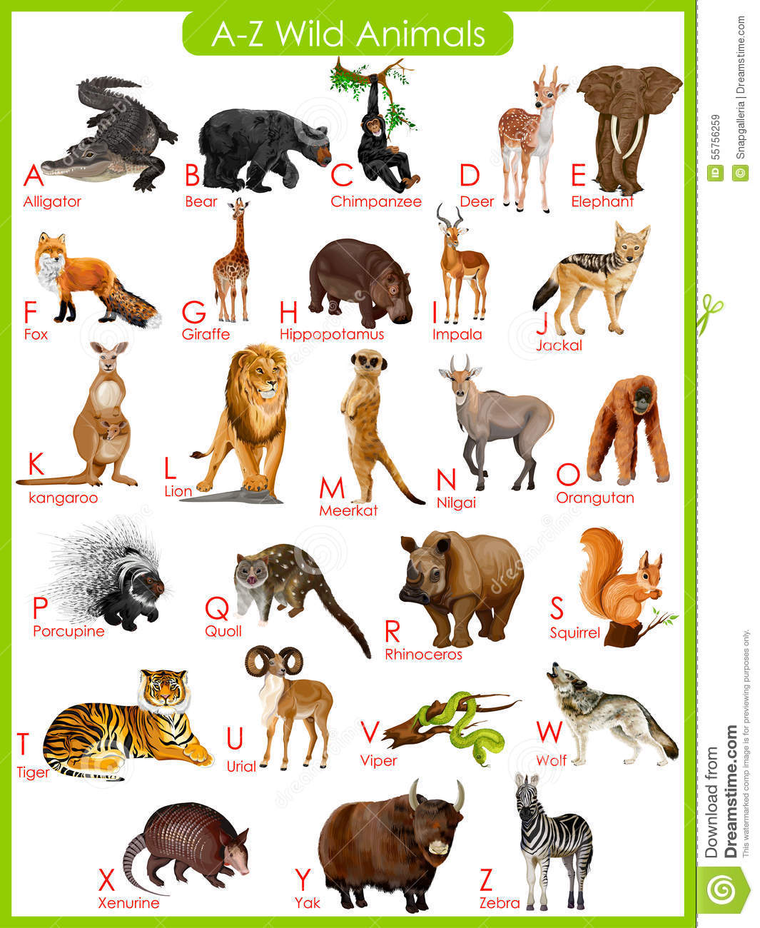Chart Of A To Z Wild Animals Stock Vector