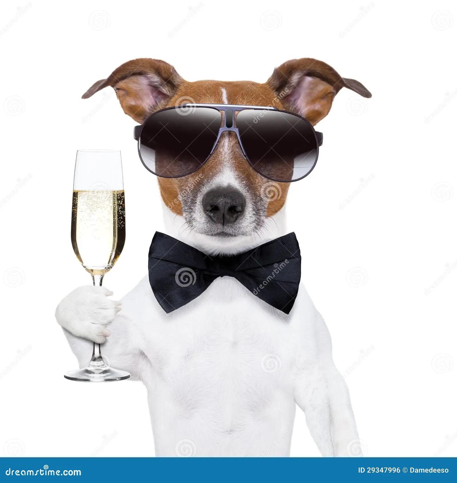 Cheers Dog Royalty Free Stock Image Image 29347996