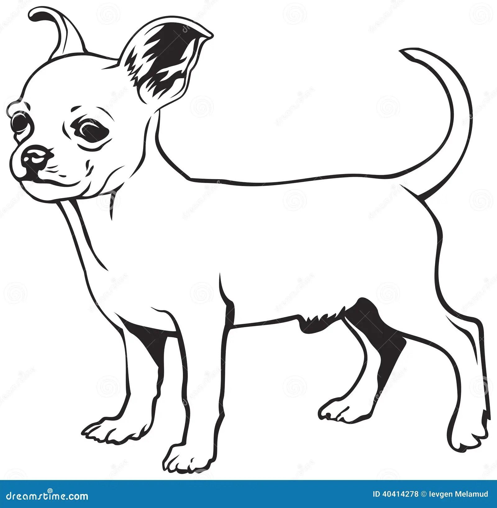 Chihuahua Dog Breed Stock Vector Image Of Vector