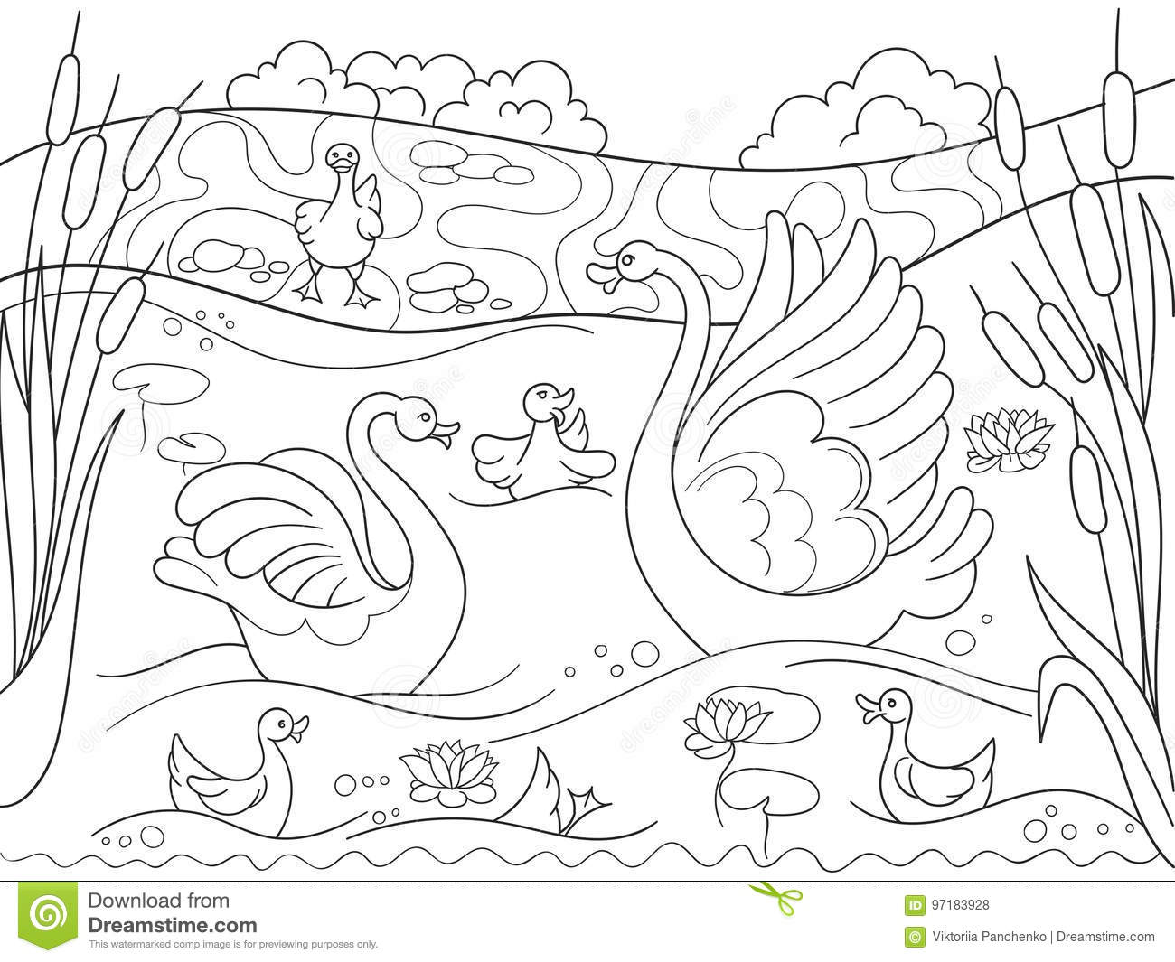 Childrens Coloring Book Cartoon Family Of Swan On Nature