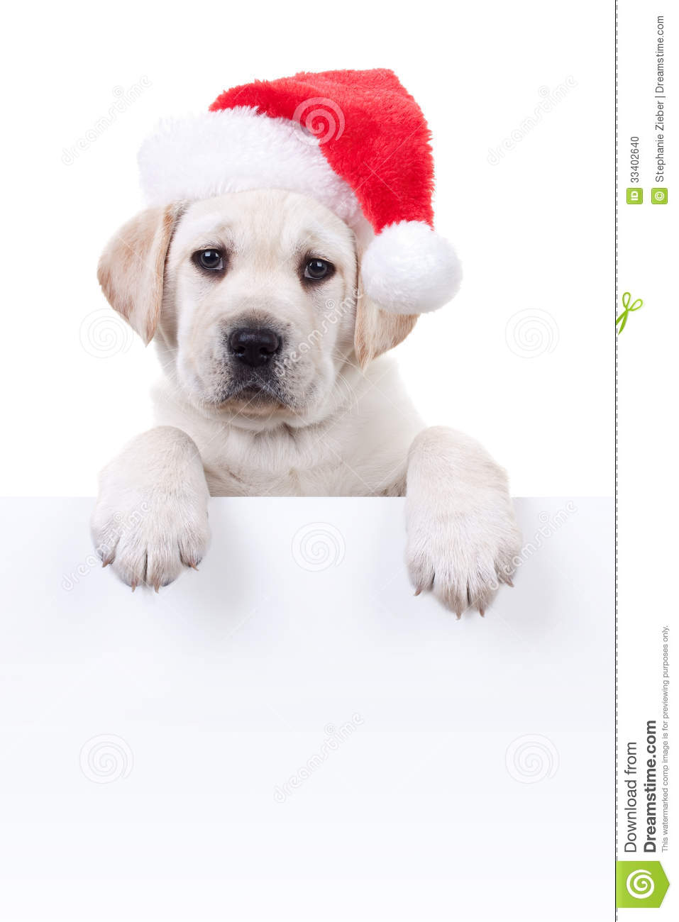 Christmas Banner Dog Stock Photo Image Of Holiday