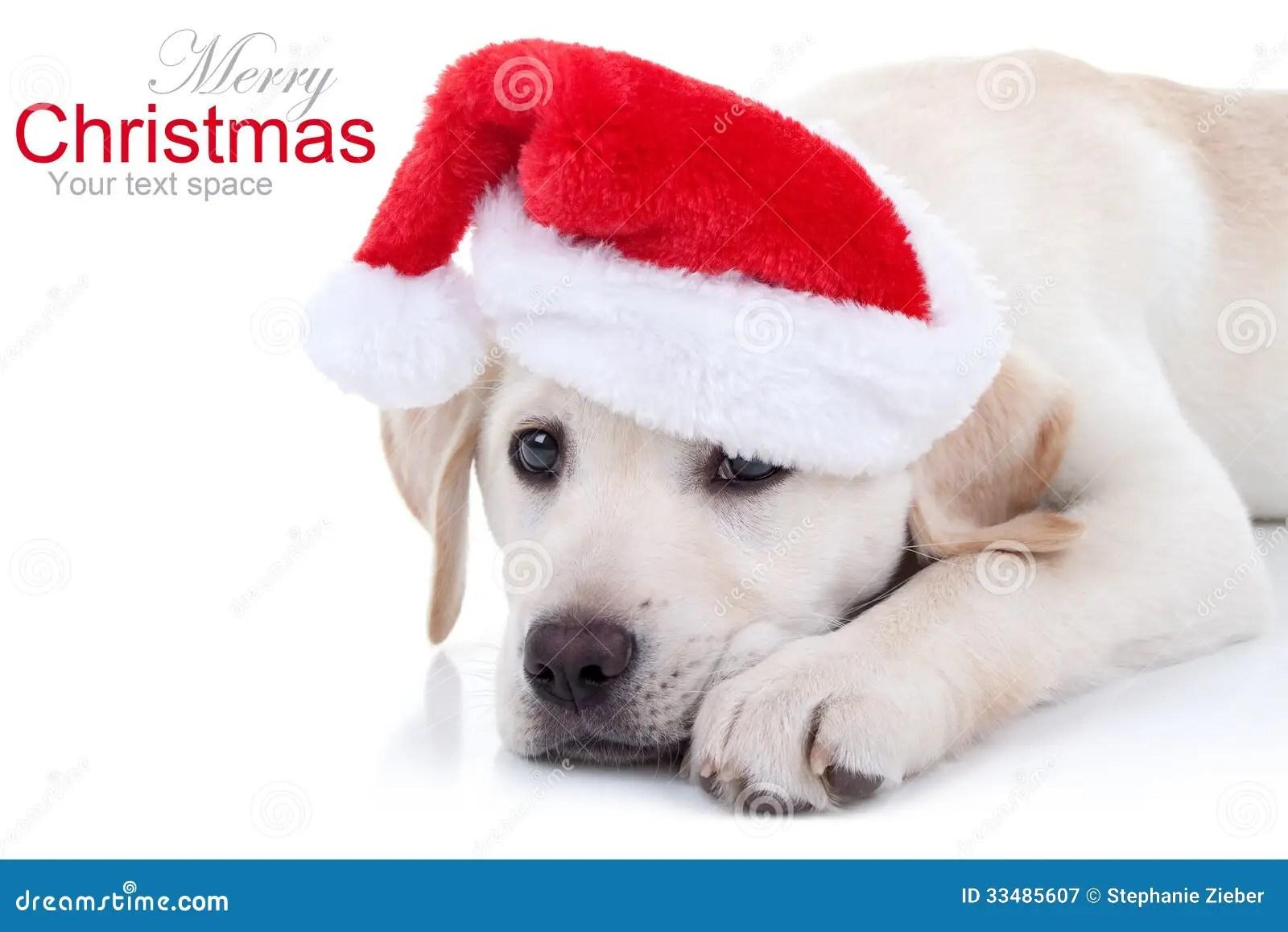 Christmas Dog Stock Image Image Of Dogs Costume