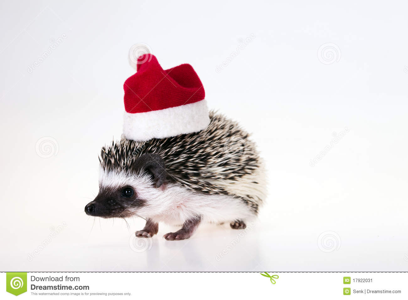Christmas Hedgehog Stock Image Image 17922031