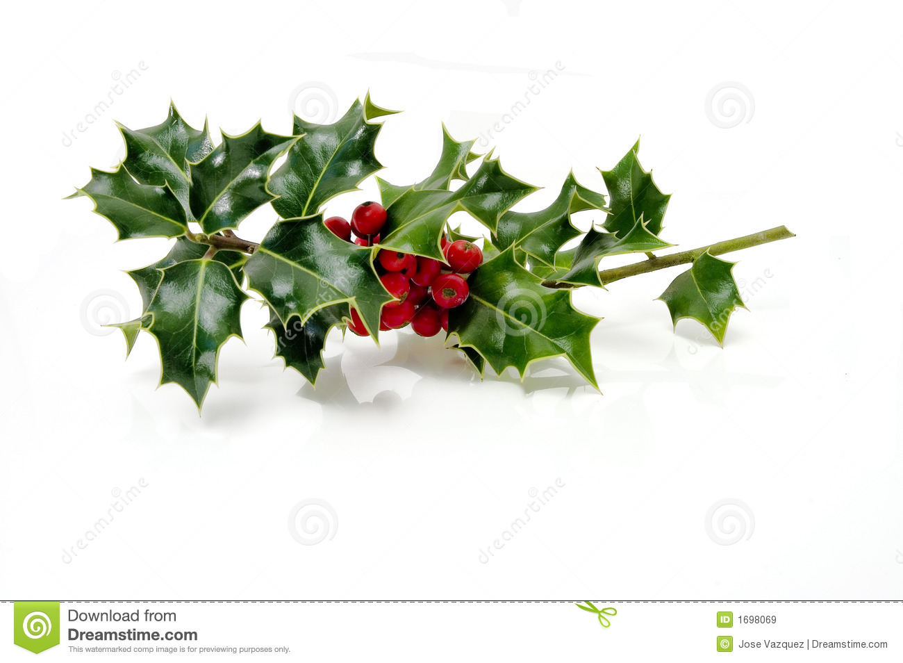 Christmas Holly Royalty Free Stock Images Image 1698069