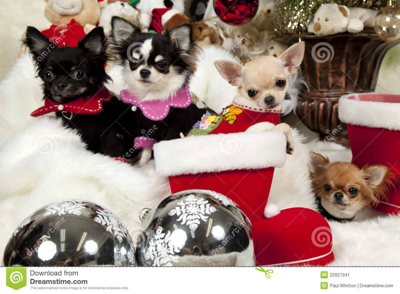 Christmas Puppies Stock Image Image 22027341