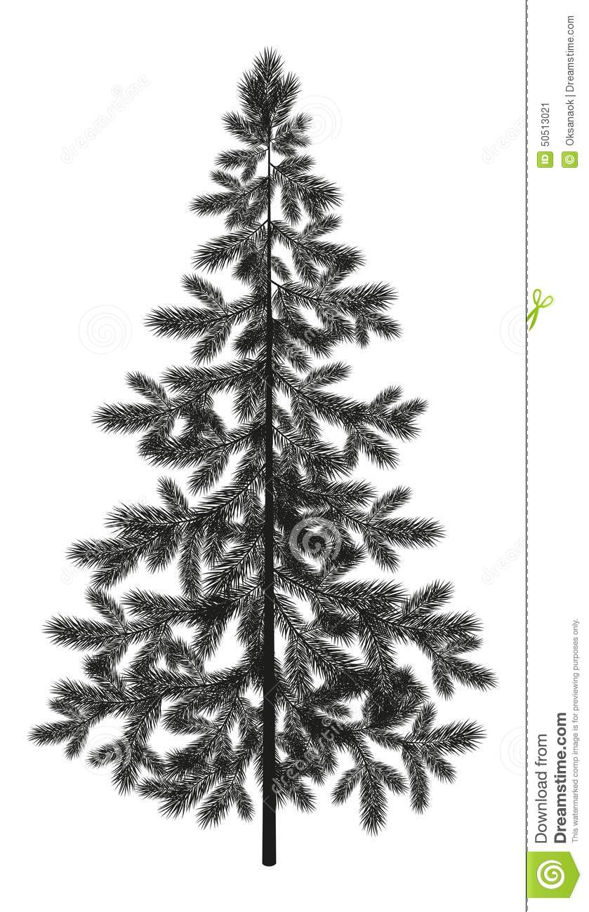 Christmas Spruce Fir Tree Silhouette Stock Vector Image