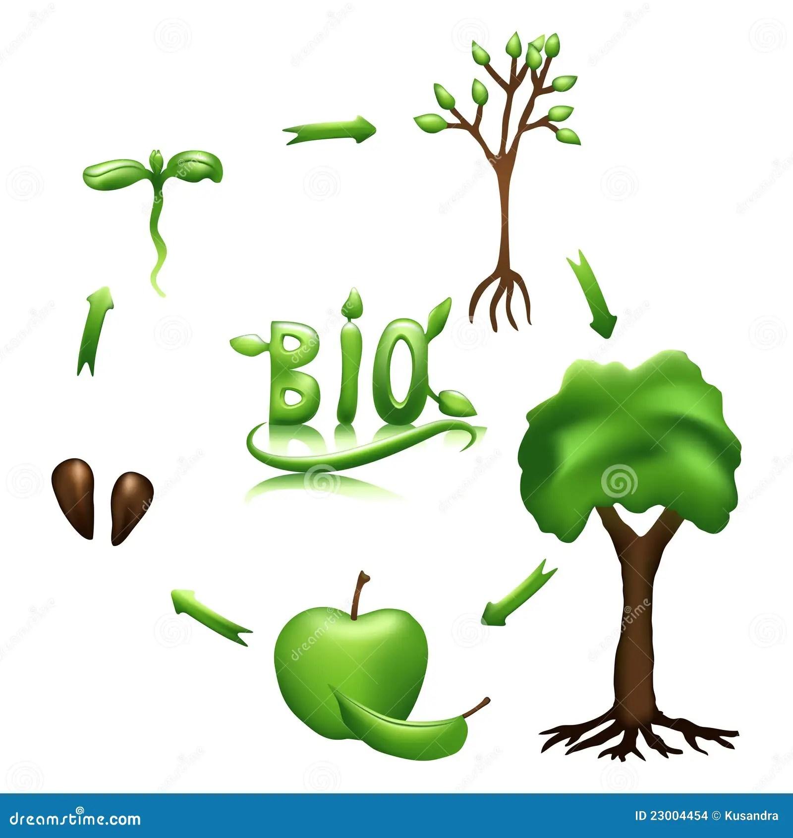 Ciclo Vital De Apple Y Bio Muestra Imagenes De Archivo