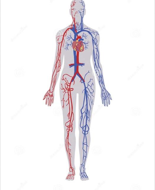 Human Anatomy Textbook Mckinley Periodic Diagrams Science