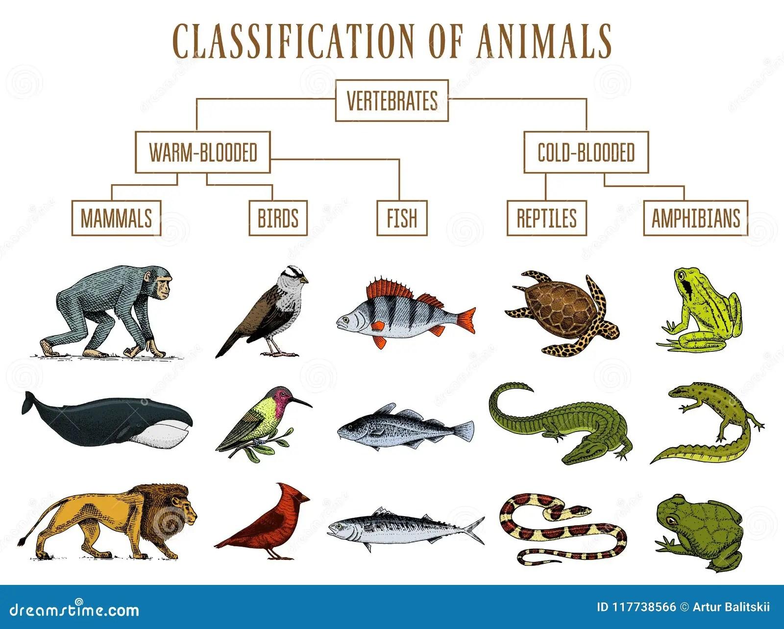 Reptiles Worksheet Grade 2