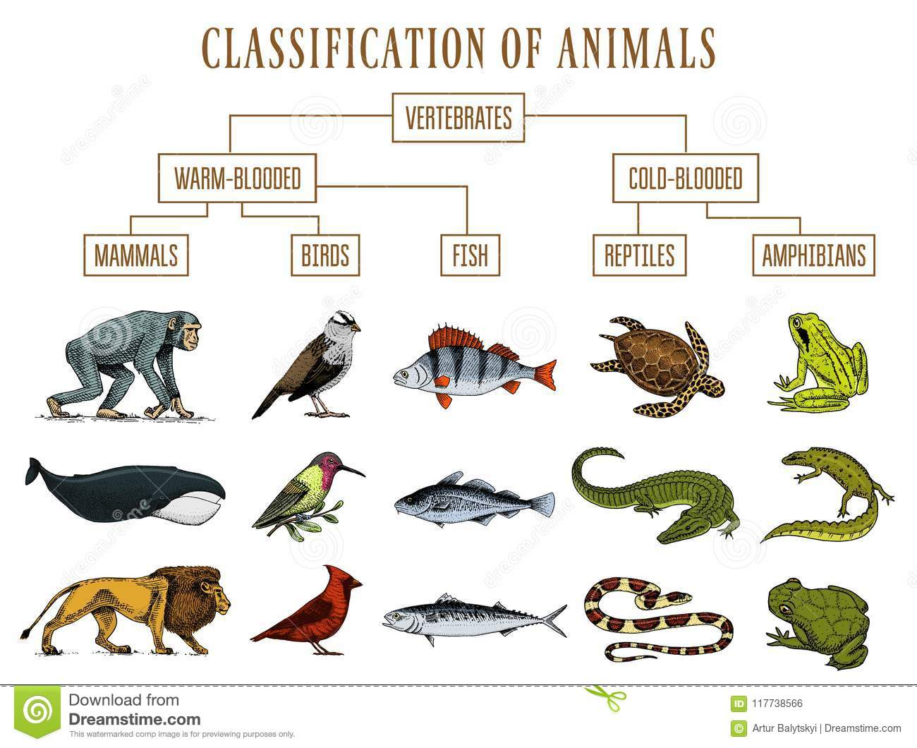 Classification Of Animals Reptiles Amphibians Mammals