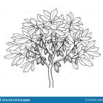 Cocoa Tree Ink Sketch Stock Vector Illustration Of Etching 129477269