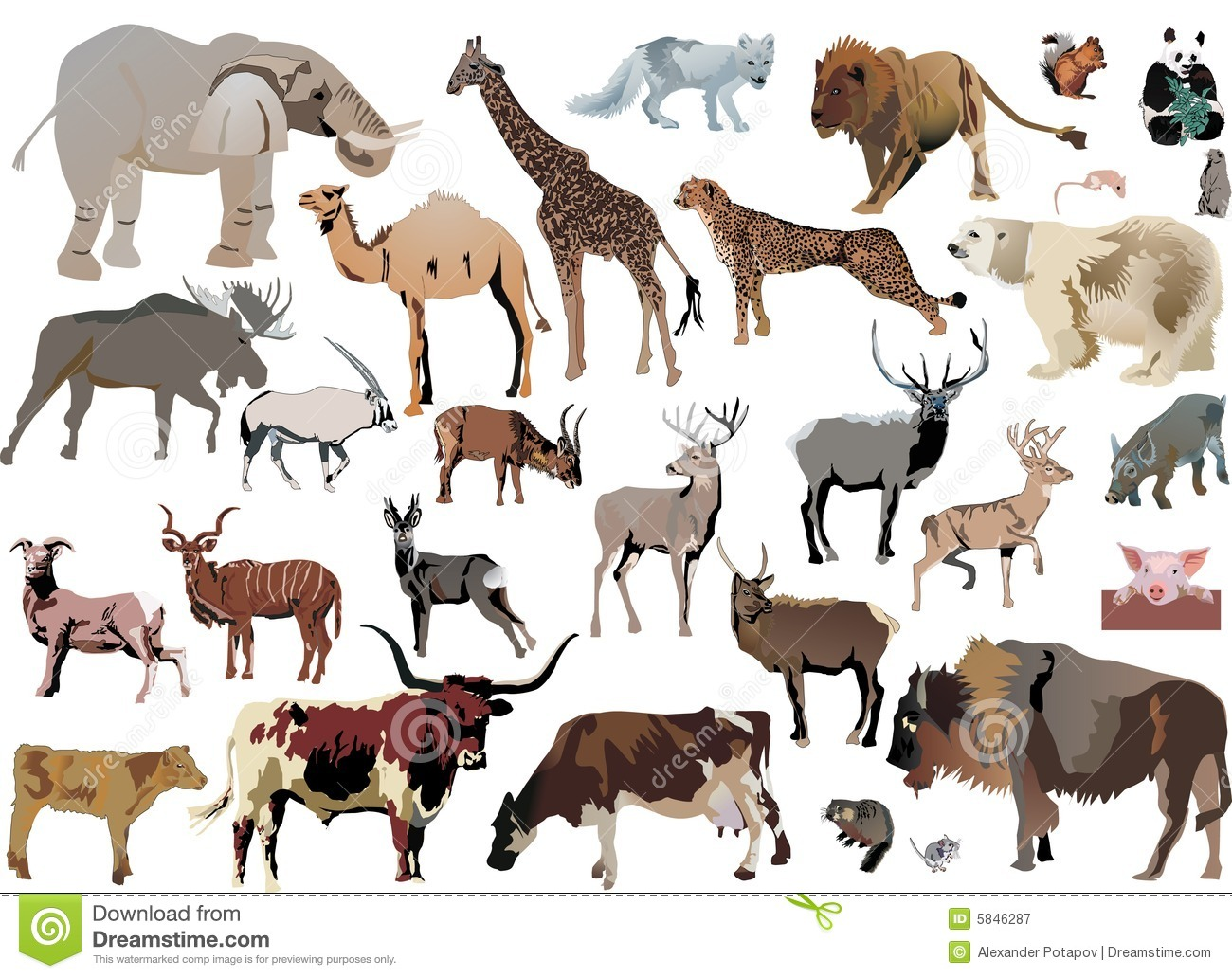 color animals set royalty free stock photography image 5846287