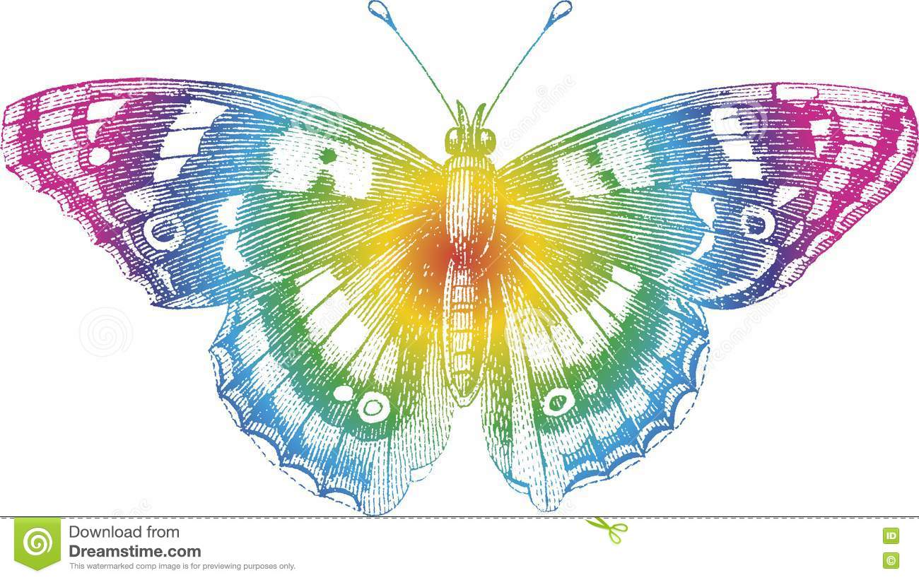 color butterfly stock images image 14479094