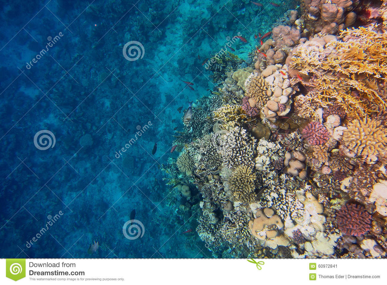 Colorful Coral Reef And Blue Seabed Stock Image