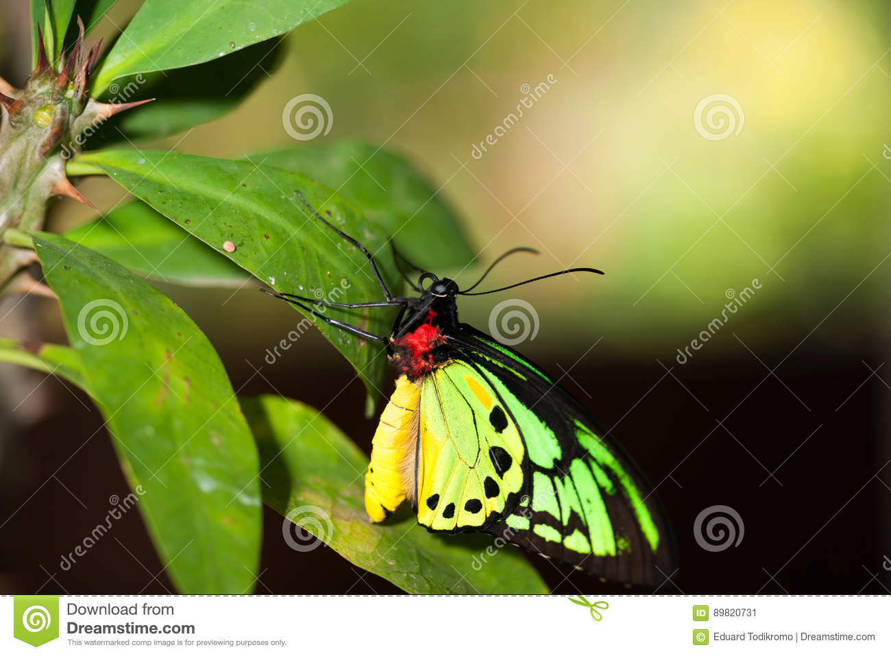 Colorful Red Yellow And Green Butterfly Sitting On A Green