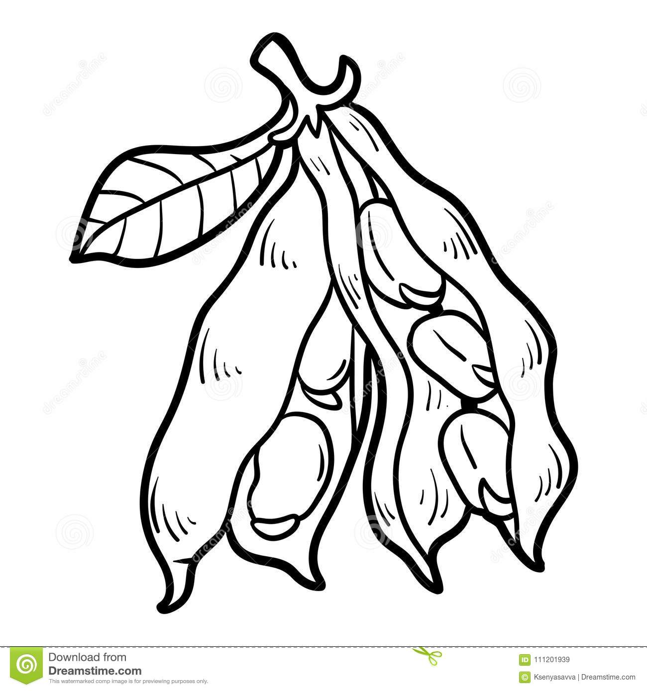 Coloring Book Broad Beans Stock Vector Illustration Of