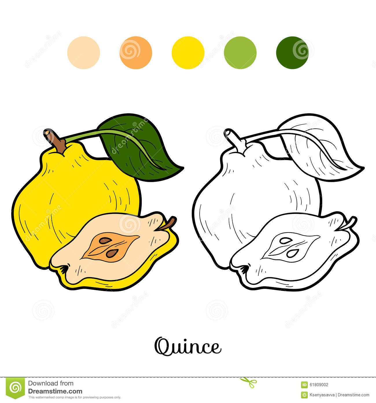 Coloring Book For Children Fruits And Vegetables Quince Stock Vector
