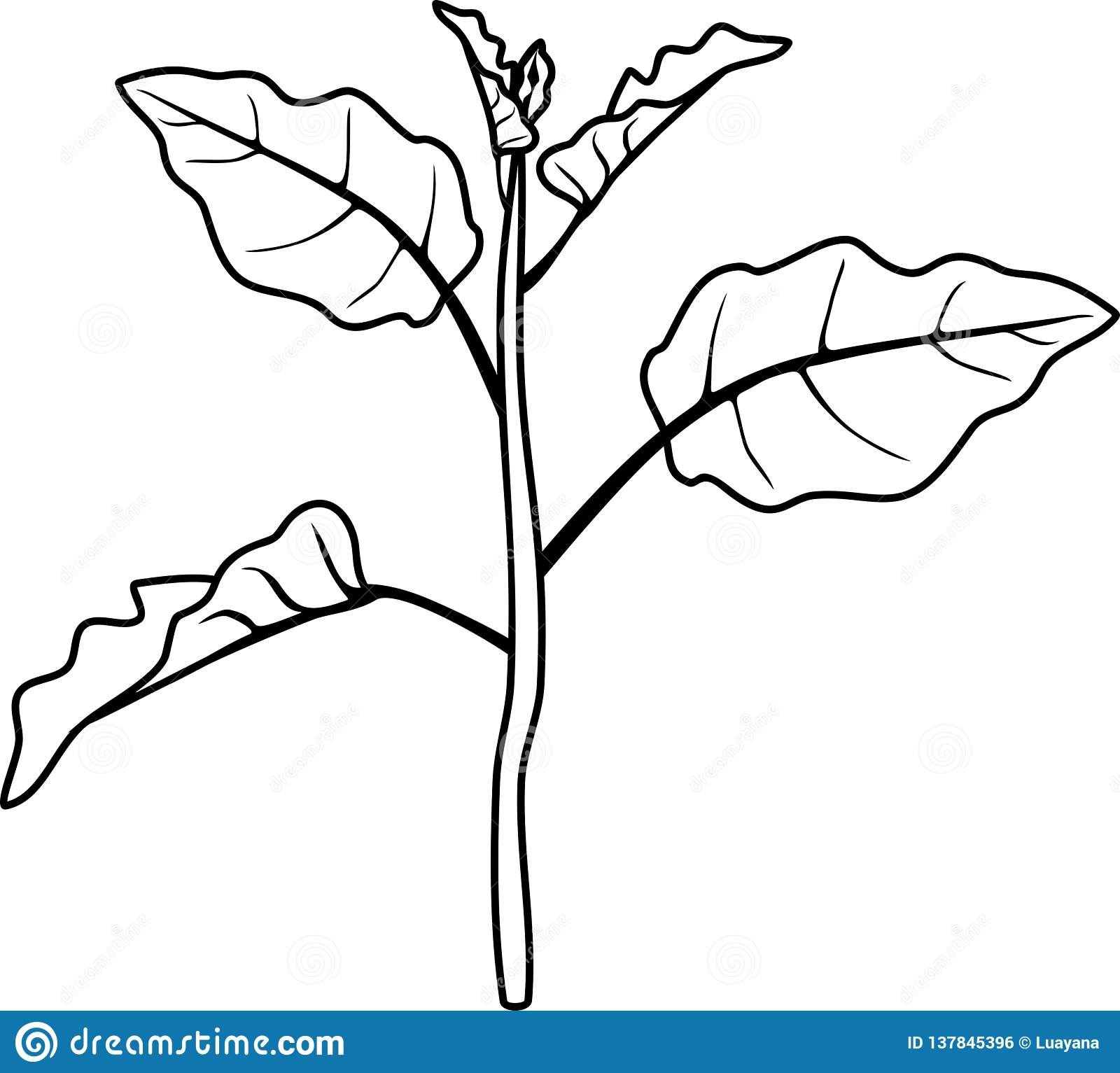 Coloring Page Eggplant Stem With Leaves Stock Vector